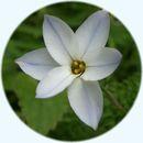 Littleflower1_1