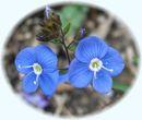 Littleflower2