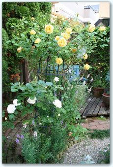 Rose5_2